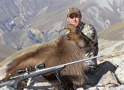 Himalayan Bull Tahr or Red Stag